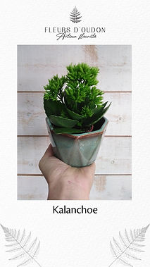 Plante - exemple 2.jpg