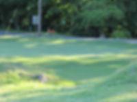 Foxburg Country Club hole seven green