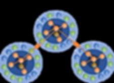 Organizational Network.png