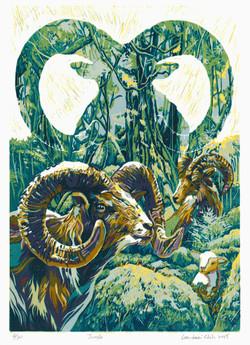 Jungle 2015