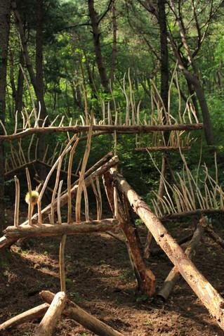 林間迴響   Forest Resound