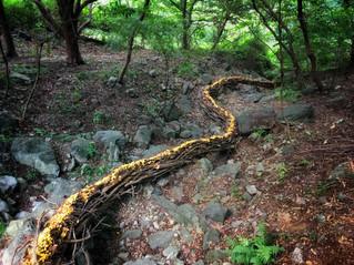 Invisible stream / 看不見的溪流