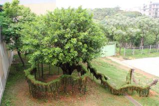 竹曲   Bamboo Meander