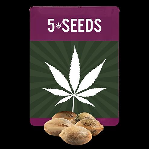 5 seeds pack mockup copy.png
