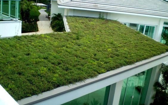 Telhado verde extensivo