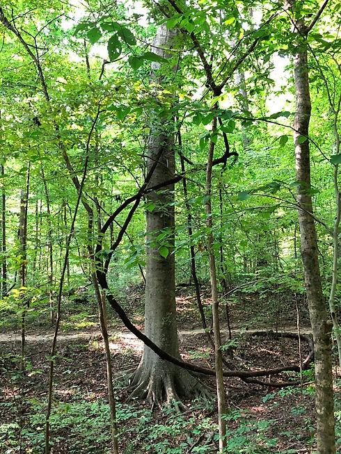 spiral tree.jpg