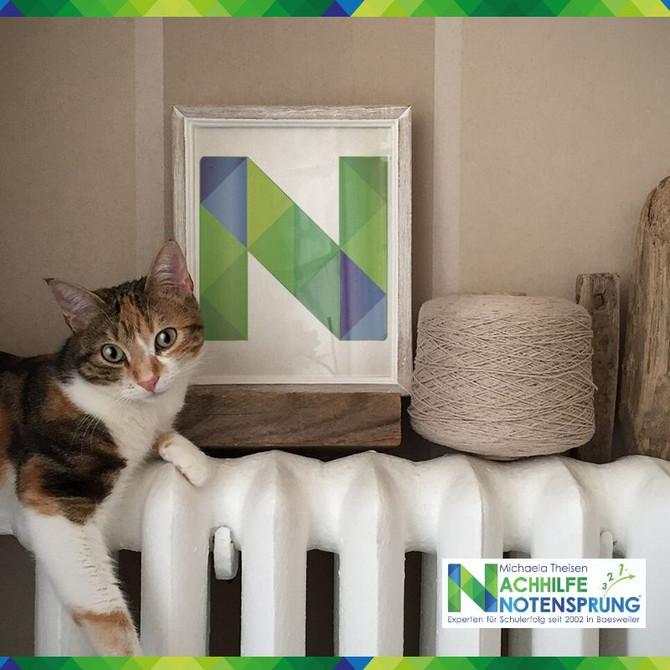 Nicht nur die Katze fühlt sich bei uns im Notensprung wohl.