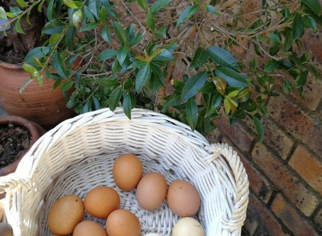 Chicken Coop - Egg farming