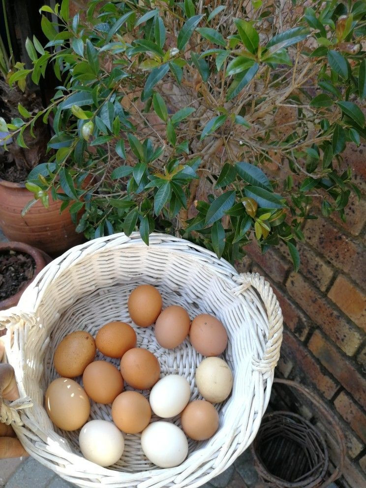 Bedford-manor-organic-farm-eggs
