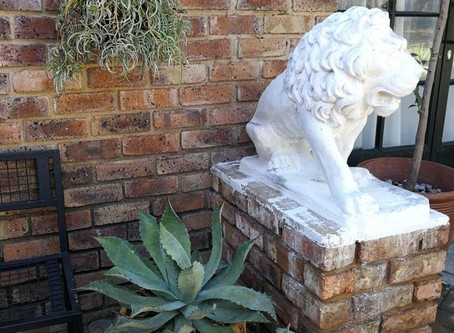 Outdoor and garden space renovation