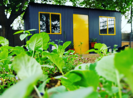 Studio 44: Trendy South Africa Garden Shed