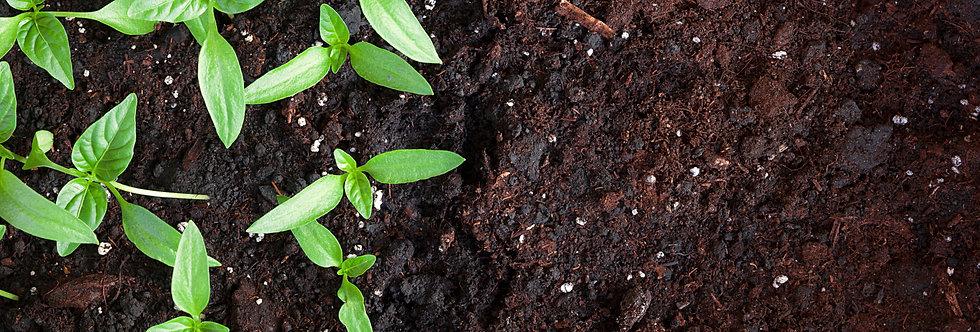 Compost Per Cubic Metre