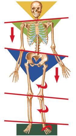 ImbalancedSkeleton