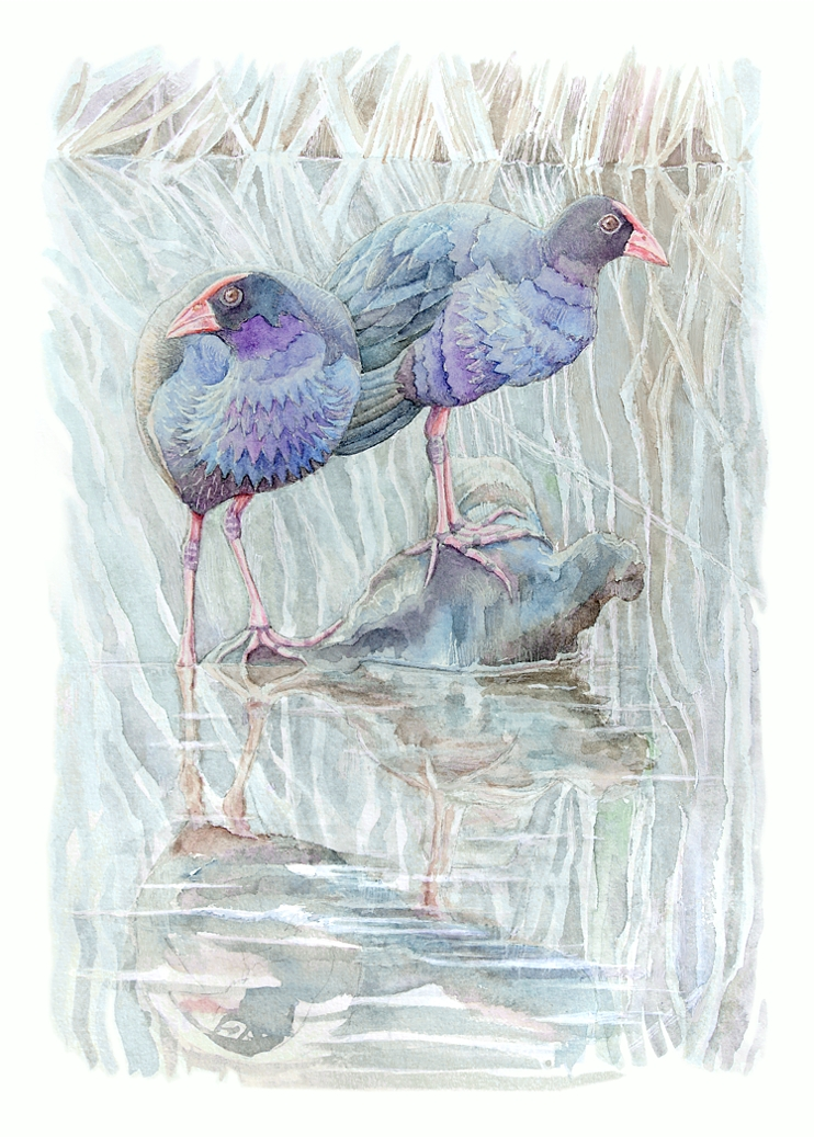 Purple swamphens. Watercolour, A4