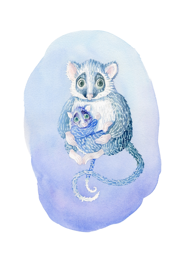 Possums in blue. Watercolour, A4
