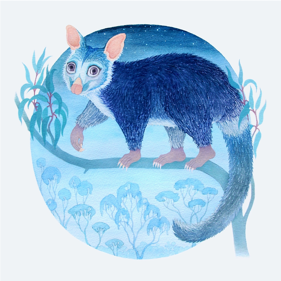 Brushtail possum, 30 x 30 cm