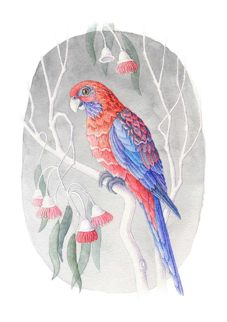 Princess Rosella. Watercolour, A4