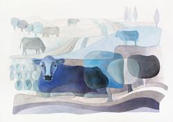 Cow farm. A3 Illustration