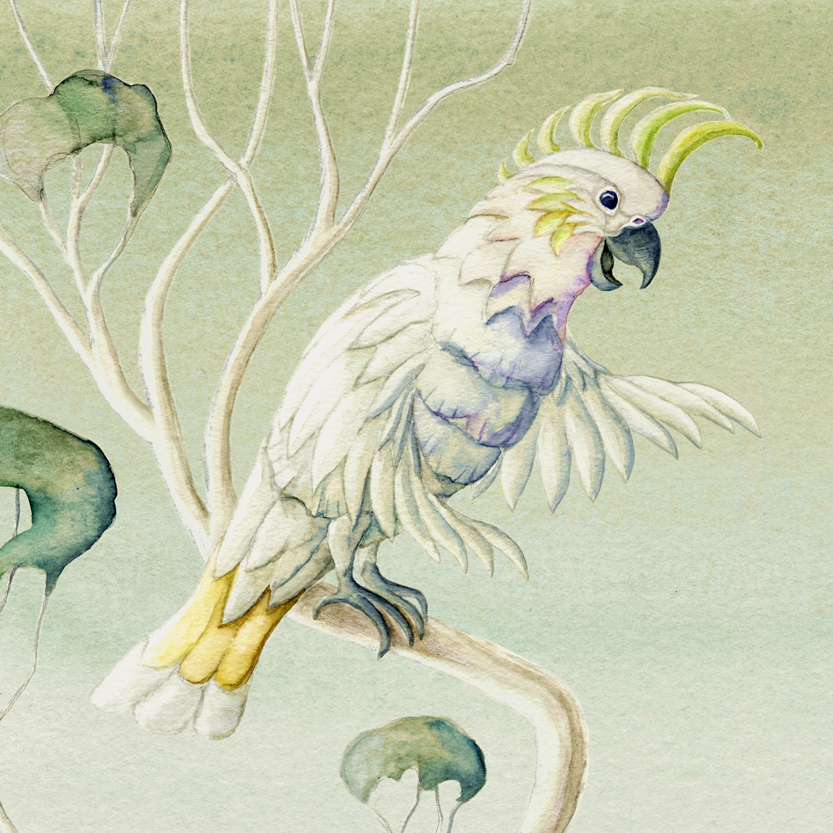 Cockatoo illustration