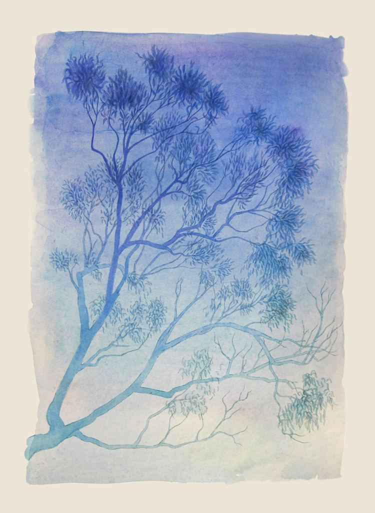 Gum tree in blue. Watercolour, A3