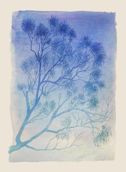 Gum tree in blue. Watercolour, A3