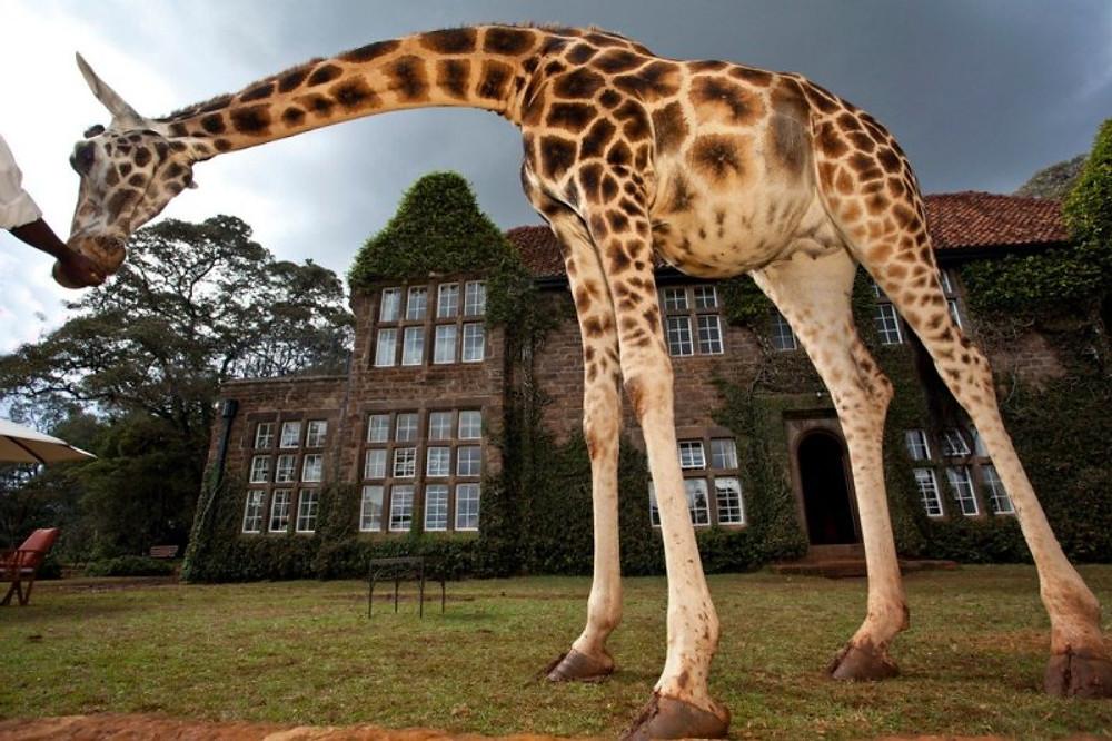 LE MANOIR DES GIRAFES - KENYA