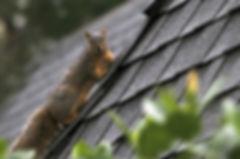 squirrel-on-roof.jpg