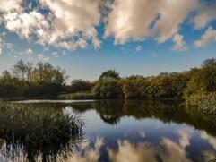 Pond in spring.jpg