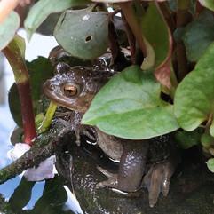 Return of the toad.jpg