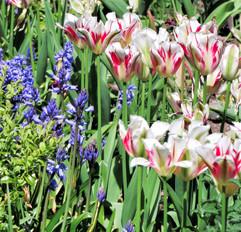 Spring time 1 (4).jpg
