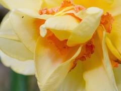 My Garden-9.jpg