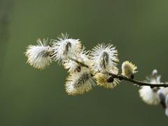 Spring-11.jpg