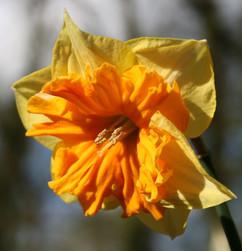 Spring-12.jpg