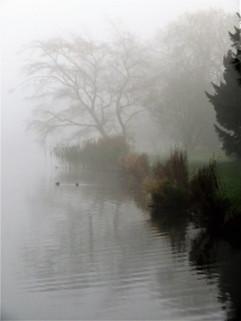 (C) Misty waters.jpg