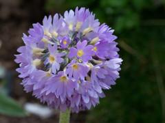 My Garden-8.jpg