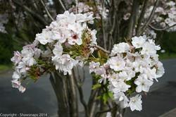 Spring 1 -2