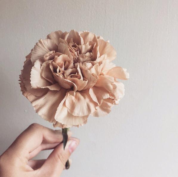 Peach Carnation Wedding Flower