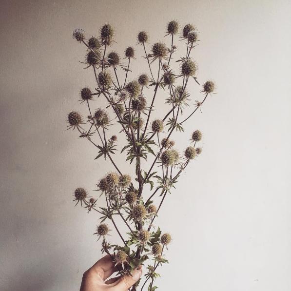 Eryngium Rustic Wedding Flower