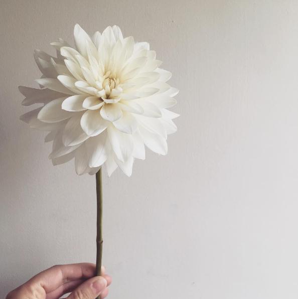 White Dahlia Wedding Flower