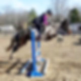 jumping horse, eventing, horse for sale, sporthorse