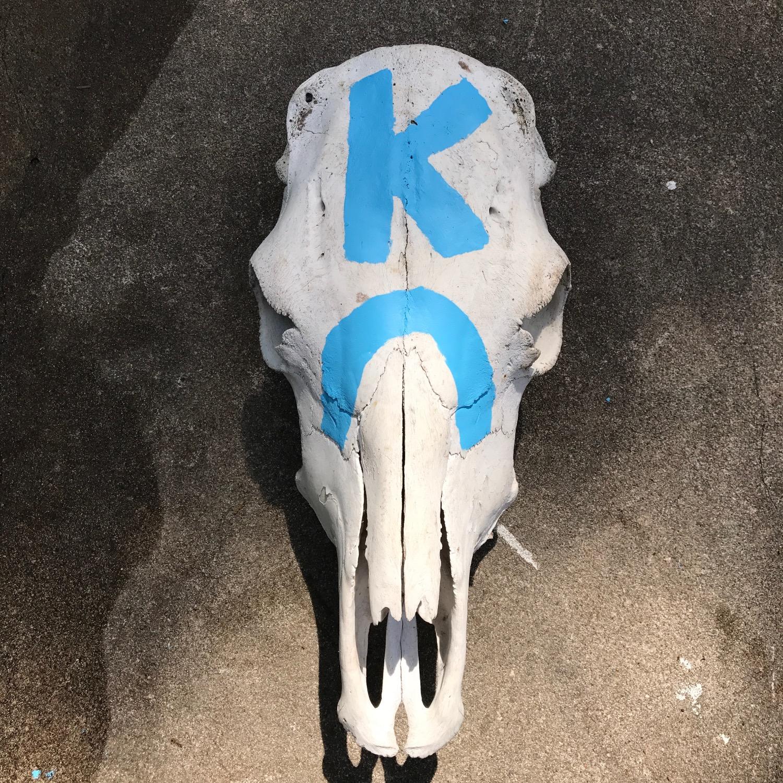 KC Cow Skull