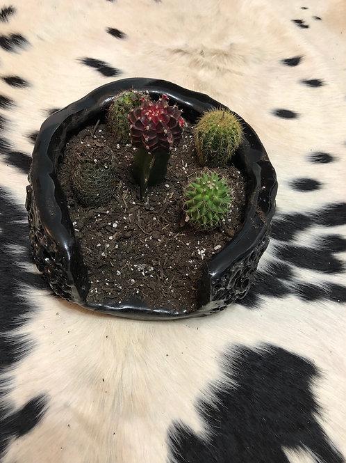 Custom Cactus Planter 3