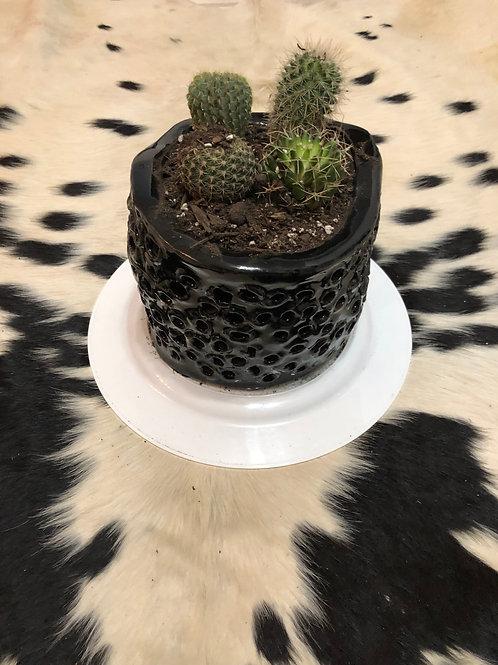 Custom Cactus Planter 1