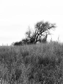 Hunting Tree