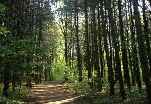mostly-shaded-trails.jpg