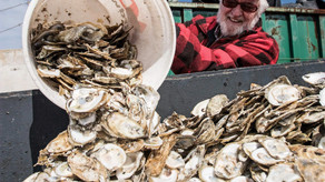 Save Those Oyster Shells