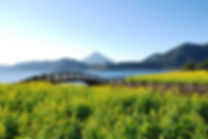 池田湖と菜の花⑤.JPG