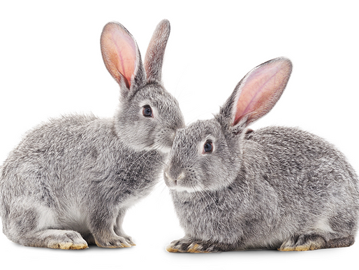 Products not Tested on Animals - The Divide between Vegan and the Plant-Based Lifestyle