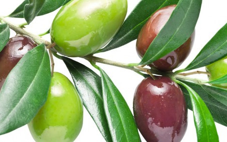 Fun Facts About Olives
