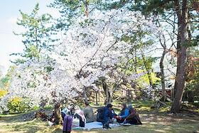 JAPAN 112.jpg